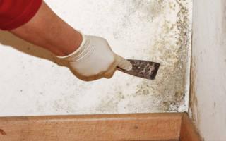 Обработка бетонных стен от плесени и грибка